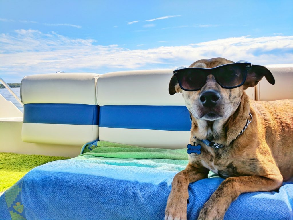 Cognitive Distortion Dog in Sunglasses